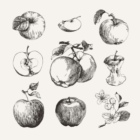 Ink drawn collection of apples isolated on white background