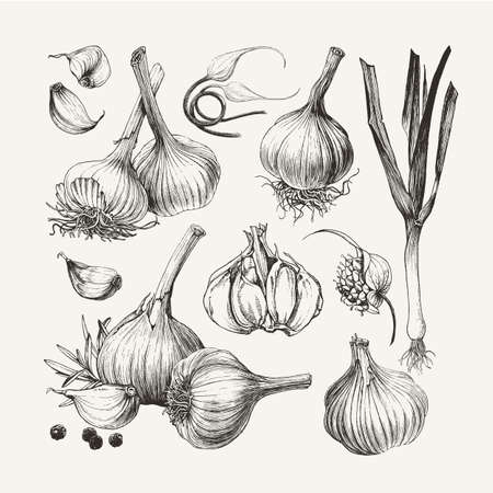 Vintage ink drawn collection of garlic isolated on white background