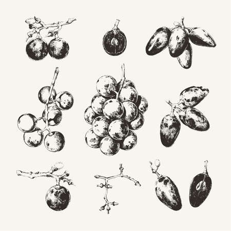 Vintage ink drawn collection of grape  on white background Ilustração