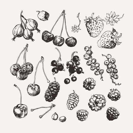 Vintage ink drawn collection of berries such as strawberry, raspberry, gooseberry and others