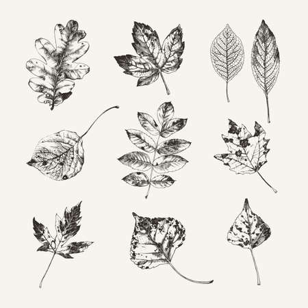 Vintage ink drawn collection of autumn leaves from various kind of trees