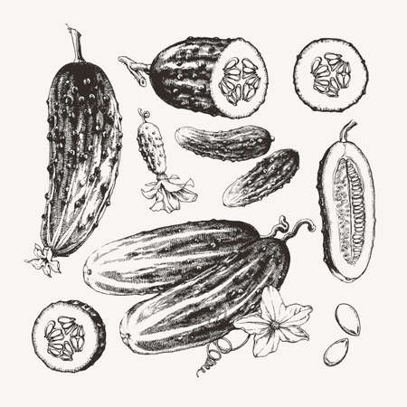 Vintage ink drawn collection of cucumbers isolated on white background