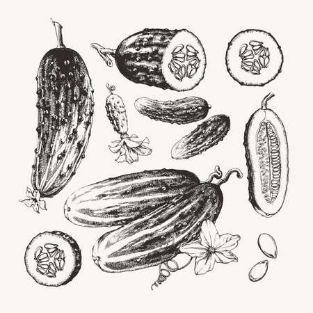 Vintage inkt getrokken collectie van komkommers geïsoleerd op een witte achtergrond