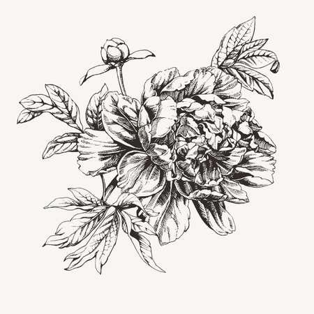 Vintage ink drawn peony flowers.