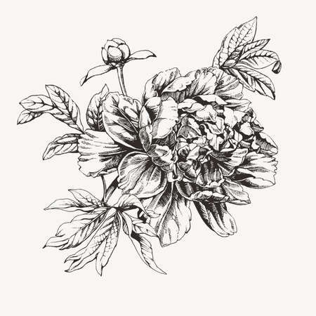 Vintage ink drawn peony flowers.