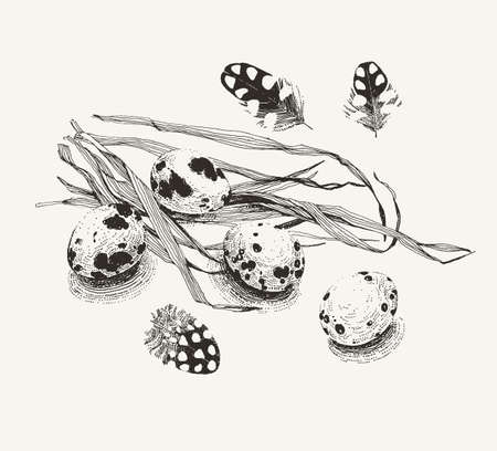 Quail eggs and couple of feathers on a bunch of grass. Every element such as eggs, feathers and grass can be used separately