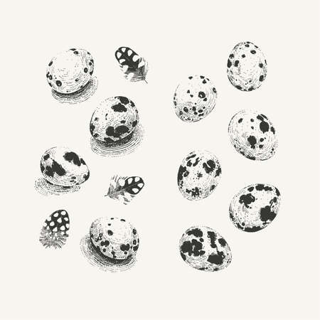 Two sets of quail eggs: with and without shadows Ilustração