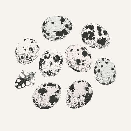 Ink drawn set of quail eggs