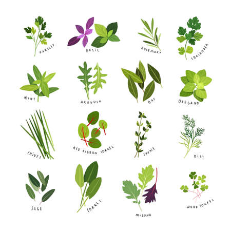 Clip art illustrations of herbs and spices.
