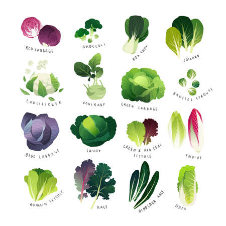 Clip art cabbage collection vector illustration