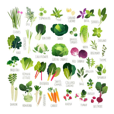 Duża kolekcja klipartów z różnymi rodzajami warzyw i popularnych ziół kulinarnych