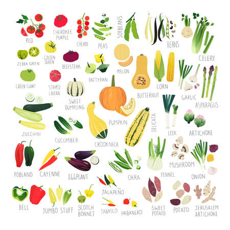 Big clip art collection with various kind of tomatoes, peppers, squashes and other vegetables Vectores