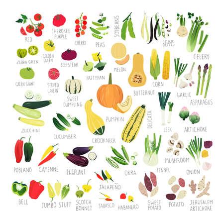 Grande collection d'images clipart avec différents types de tomates, poivrons, courges et autres légumes