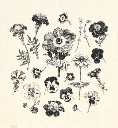 Vintage botanical graphics, collection of hand drawn flowers such as marigold, petunia, pansies and others