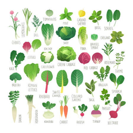 Clip art food collection Vol.1: vegetables and herbs  イラスト・ベクター素材