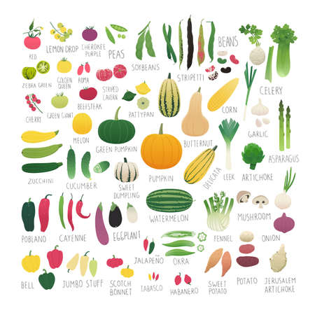 Clip art food collection Vol.2: vegetables