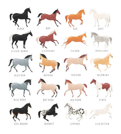 Equestrian illustration of common horse coat colours 일러스트
