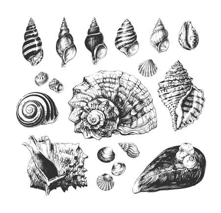 Ink drawn seashells collection 写真素材 - 133115445