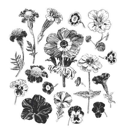Grafika botaniczna, kolekcja ręcznie rysowanych kwiatów, takich jak nagietek, petunia, bratki i zawilec