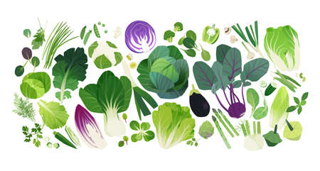 Vector background, cabbage and leafy greens clip art icons