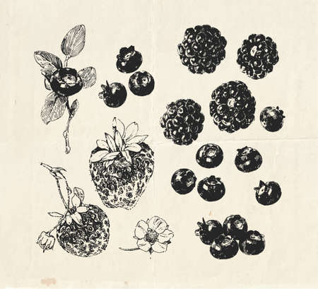 Hand drawn set, vintage drawings of berries such as blackberry, blueberry and strawberry