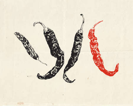 Realistic hand drawn hot chili peppers. Vintage culinary illustration
