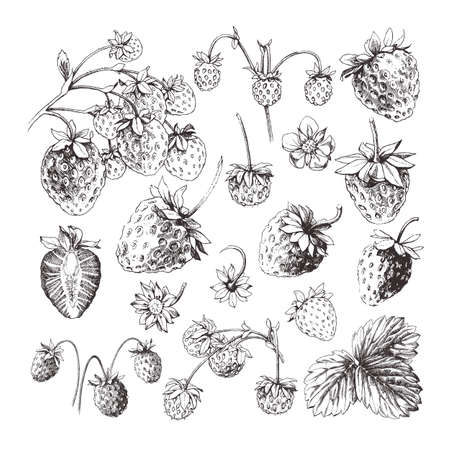 Collection of hand drawn strawberries isolated on white background 向量圖像