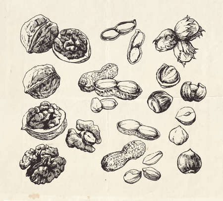 Vintage collection of hand drawn nuts, walnuts, peanuts and hazelnuts