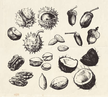 Vintage collection of hand drawn nuts, almonds, coconut, pecan nut, pistachio and chestnut