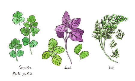 Culinary herbs, hand drawn illustrations isolated on white, part 2 向量圖像