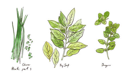 Culinary herbs, hand drawn illustrations isolated on white, part 3