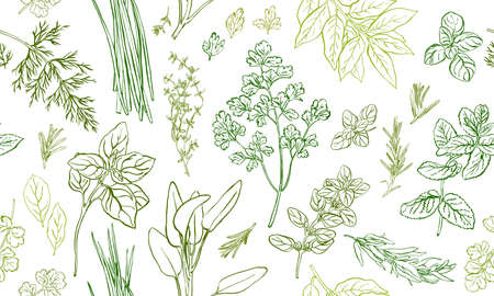 Herbs and spices seamless pattern, hand drawn botanical background