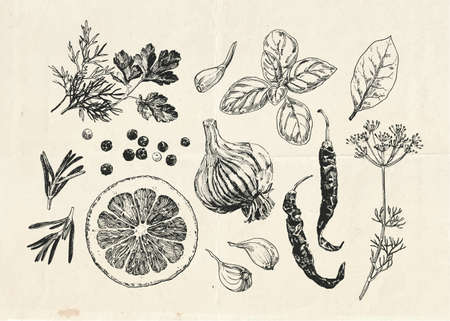 Herbs and spices hand drawn set, vintage illustration 向量圖像