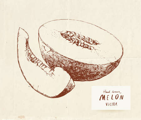 Vintage drawing of ripe sugary melon, sliced and cut in half 向量圖像