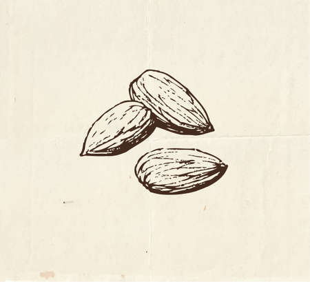 Nuts and seeds drawing, almond kernels vintage illustration