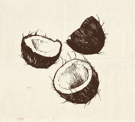 Nuts and seeds drawing, coconut hand drawn illustration Çizim
