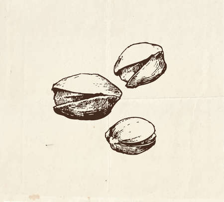 Nuts and seeds set, vintage pistachios drawing, hand drawn illustration