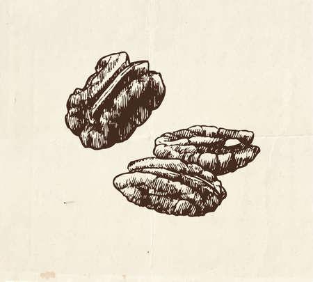 Nuts and seeds drawing, pecan vintage illustration 向量圖像