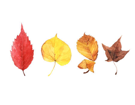 Drawings of autumn red and yellow leaves isolated on white background 版權商用圖片