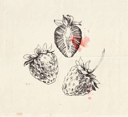 Hand drawn illustration of strawberry, cut in half berry, detailed vintage drawing