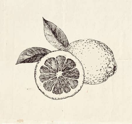Hand drawn lemons, sliced with leaves, detailed food illustration