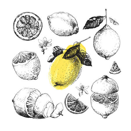 Hand drawn illustrations of beautiful yellow lemon fruits, peeled and sliced, with leaves
