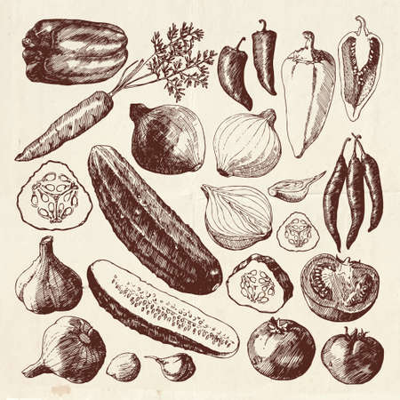 Big vegetable collection, hand drawn harvest illustration, vegetables sliced in half
