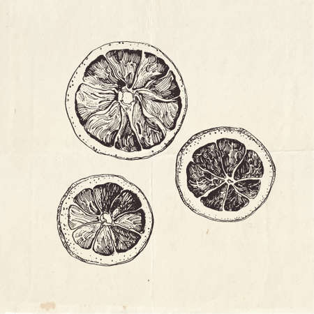 Hand drawn illustration of dried lemon slices. Ingredients for mulled wine