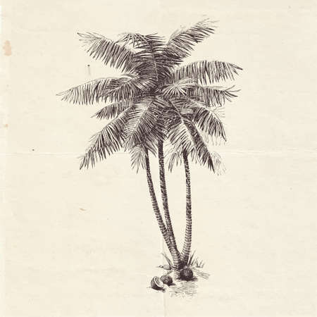Ink drawn illustration of palm tree, concept of summer and vacation