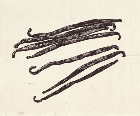Vanilla pods, vintage graphic illustration Vettoriali