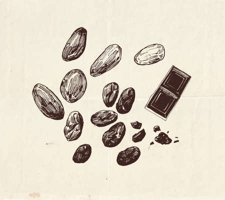 Chocolate cocoa beans drawing, vintage graphic illustration
