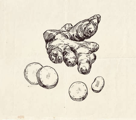 Ginger root with slices ink  drawing, common spice, graphic illustration