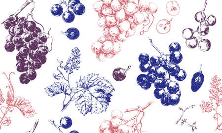 Seamless pattern with grape drawings, hand drawn illustration of fresh grape vines Ilustração