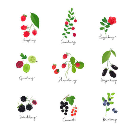 Collection of berry illustrations, berries with leaves and stems